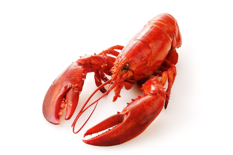オマール海老とロブスターは違うもの?食べ方やレシピをご紹介